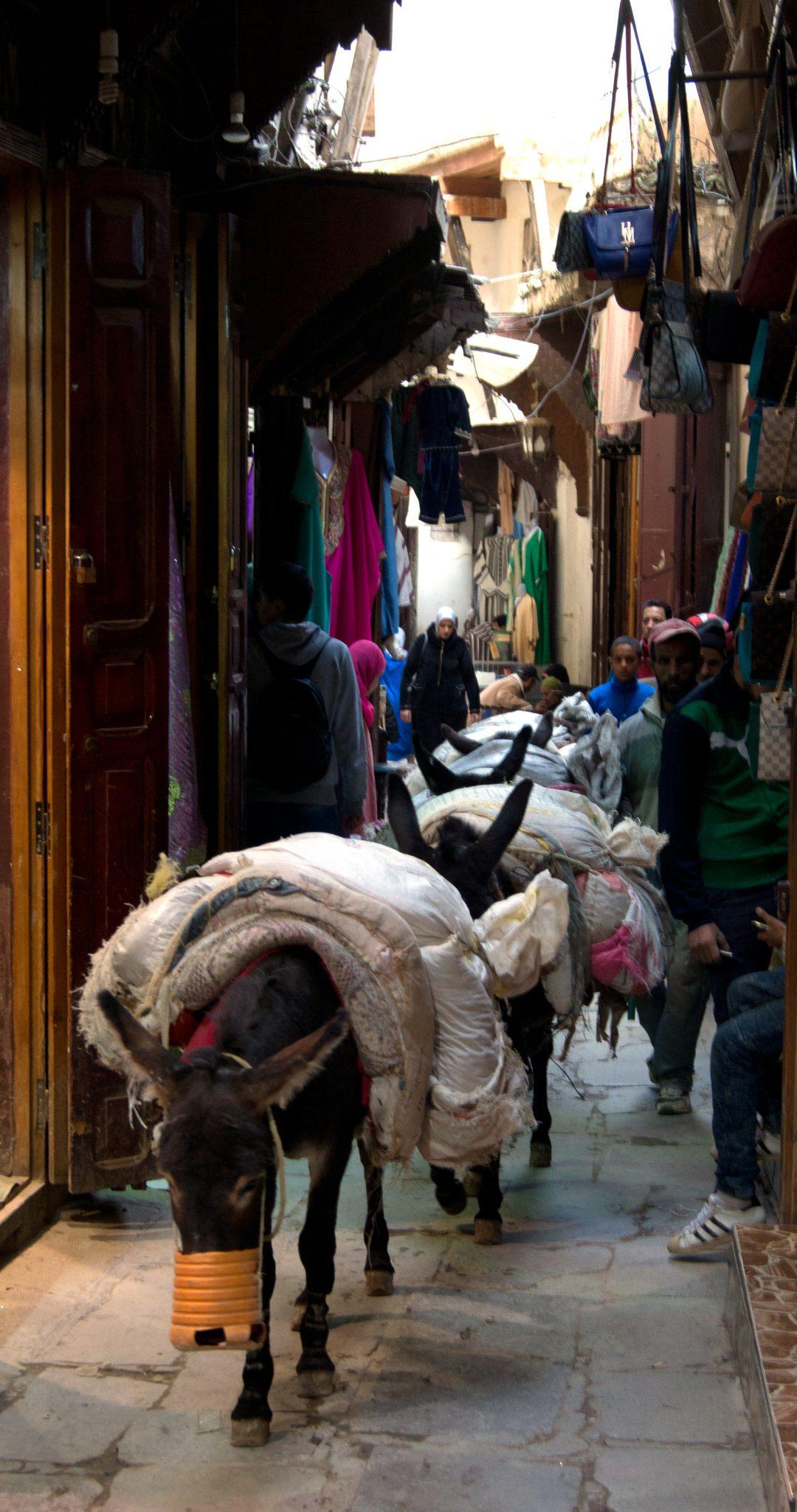 Una carovana di asini attraversa le stradine di Fez
