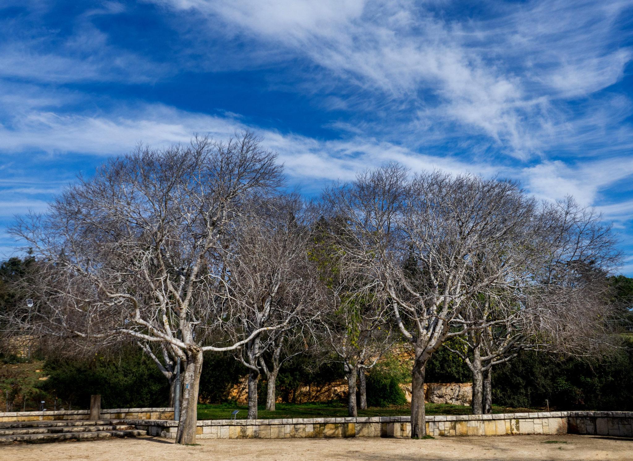 Alberi nel Parco Sacher