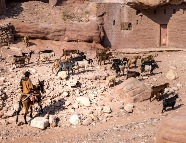 Un pastore nel Wadi Musa